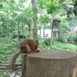 井の頭公園の動物園