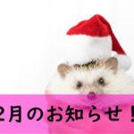 12月のお知らせ!!